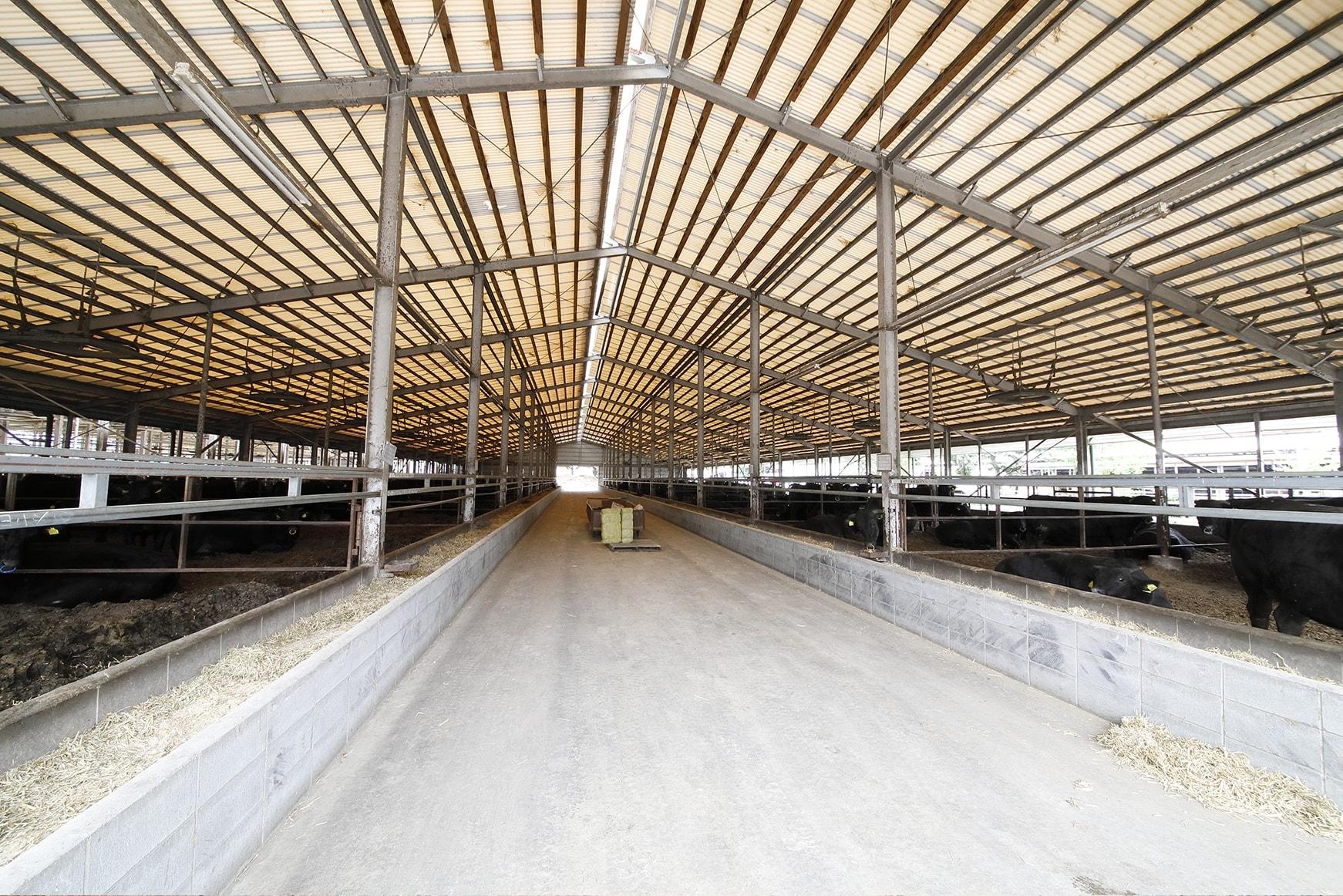 亀井牧場グループの牛舎