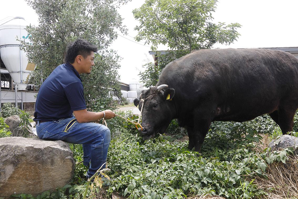 亀井牧場グループでは、愛情を持って牛さんを育てることが社訓